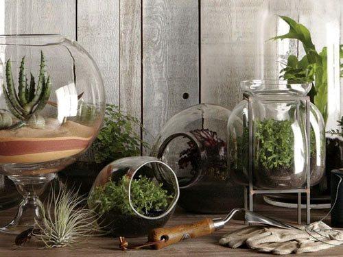 taman di dalam rumah terrarium desain gambar foto tipe