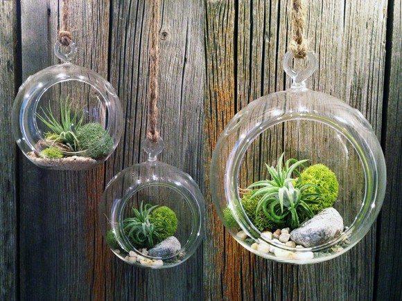 Gambar Taman Minimalis Dan Cara Membuatnya Taman Terrarium