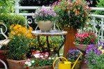 Taman Depan Rumah Kreasi Pot Indah